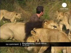 Hugs with Lions - No comment - YouTube  this just changed my life. i seriously make involuntary squeak sounds at :10