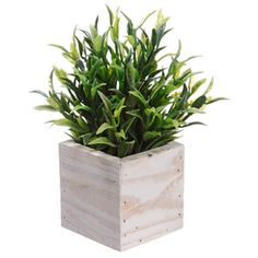 """7"""" Thyme Silk Herb Plant w/Wood Container -Green (pack of 12) - This is one that stagers would use all the time - the size is perfect. It would work with grasses, succulents - the plant could be a little wider - very similar to the one most stagers use that Ikea sells"""