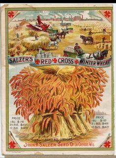 MATIN LUMINEUX: Etiquettes anciennes de graines