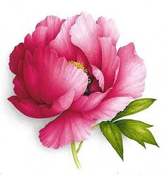 "2,138 Likes, 27 Comments - Aquarelles Botaniques (@vincentjeannerot) on Instagram: ""#peonies #pinkpeony #pivoines #pivoinerose #pivoinearbustive #watercolor #botanicalart…"""
