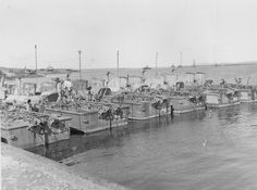 PT boats ~ BFD