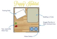 Here's how to set up your house in preparation for a New Puppy! So many awesome bits of advice in this post!