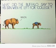 Bison :) hahah @Erika Goeckeritz this reminds me of you...only cause you have buffalo:)