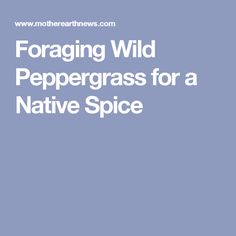 Foraging Wild Peppergrass for a Native Spice