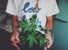 #bossbitch #tshirt ✌️   See more from dandy's daughters on fb, insta & tumblr   #dope #marihuana #plants #girl
