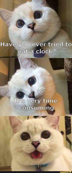 cat, funny, joke