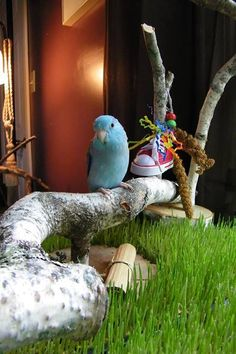 Little bitty Mozart enjoying his playground! Thank you to Ce Kerschlibowski for the photo! Bird Toys, Ten, Beautiful Birds, Playground, Parakeets, Parrots, Cute Animals, Wings, Brain