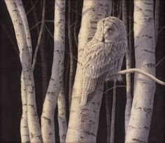 | Renso Tamse - 'Great Grey Owl'