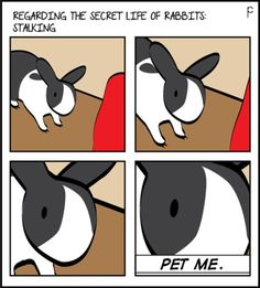 The secret of rabbit stalking