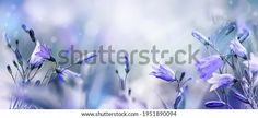 Lilac Bellflowers On Blurred Purple Blue Stock Photo (Edit Now) 1951890094 Lilac, Purple, Blur, Photo Editing, Royalty Free Stock Photos, Illustration, Flowers, Pictures, Image