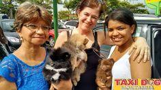 TAXI DOG MONTANHA TRANSPORTE DE ANIMAIS NO RIO DE JANEIRO: MAYSA E SEUS FILHOTINHOS10/12/2015 -- Essa é a May...