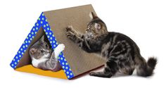 Petstages Fold Away Scratching Tunnel Toy for Cats (Colors May Vary) * Check out this great image  : Cat toys