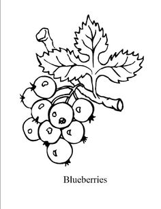 1000 images about coloring pages on pinterest coloring for Blueberry coloring page