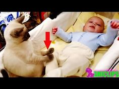 Amazing Cat Protecting Babies ✯  Cats Always Love Babies - YouTube