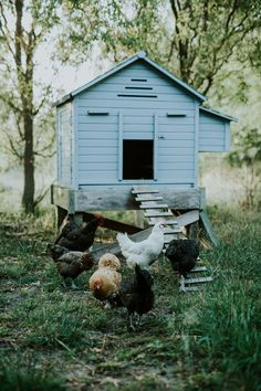 Vincent Van Gogh, Chicken Garden, Future Farms, Keeping Chickens, Farms Living, Hobby Farms, Small Farm, Farm Gardens, Slow Living