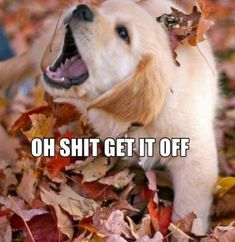 233371- dogs- leaves- dog.jpg