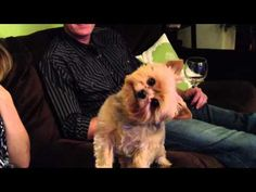 So I Was Explaining Thanksgiving To My Dog, & She Started Doing The Weirdest Thing! – iHeartDogs.com