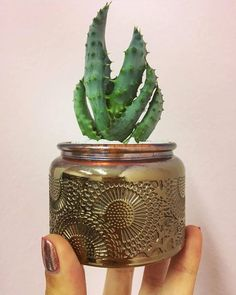 Recycled Jars, Planter Pots, Recycling, Vase, Design, Diy, Home Decor, Packaging, Diy Creative Ideas