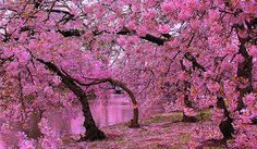 Springtime in St James' Park by Patrizia Ilaria Sechi, via Flickr