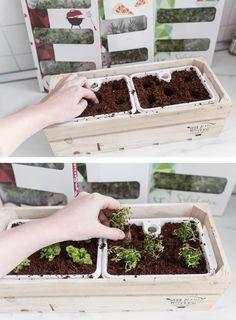 Küchenupdate: Kräutergarten in meiner Küche. Einpflanzen und Pflege