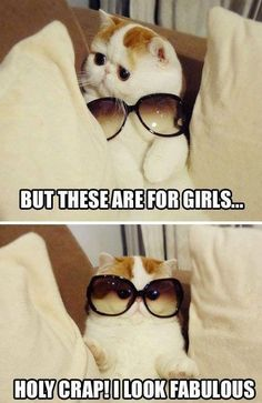 Haha and I don't even like cats:)