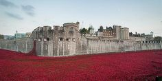 Lessons from the First World War Centenary report published - News from Parliament - UK Parliament Poppy Photo, Remembrance Poppy, Unknown Soldier, Civil Society, Lest We Forget, Tower Of London, New Perspective, Great Britain, Free Photos