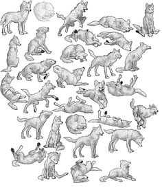 How to draw a wolf - different poses: howling, lying, standing - Animal drawing reference Cute Animal Drawings, Animal Sketches, Art Sketches, Wolf Drawings, Drawing Reference Poses, Drawing Poses, Drawing Tips, Animation Reference, Drawing Tutorials