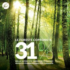 I numeri delle foreste #trees #forest #forestforlife #alberi #green #nature