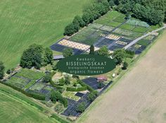 #Bisselingskaat, flowerfarm in NL, certified organic cut flowers. Aerial view, 2011.