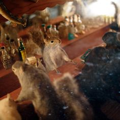 A stuffed squirrel tends bar in a tiny saloon. The diorama came from a funeral home in Wisconsin, where apparently it was intended to console the bereaved. (Photo: Ramsay de Give for The New York Times)