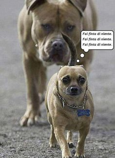 45 Funny Dog Memes - Funny Dog Quotes - 25 funny dog memes that feature a picture of a pooch and a funny caption written by a human. The post 45 Funny Dog Memes appeared first on Gag Dad. Funny Animals With Captions, Funny Animal Jokes, Funny Dog Memes, Funny Captions, Crazy Funny Memes, Really Funny Memes, Cute Funny Animals, Funny Cute, Funny Dogs