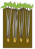 Onpeutlefaire.com - Fiche technique : la tour de pommes de terre Culture Tomate, Diy Jardin, Permaculture Design, Green Tips, Plantation, Horticulture, Tour, Planters, Home And Garden