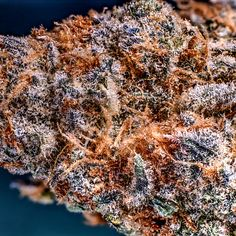 Buy High Grade Medical Marijuana | Weed For Sale | THC and CBD Oil For Sale | Edibles For Sale | Hemp Oil | Wax Oil | At Affordable Price Text / call +1 (908)485-7293 website: https: //www.legalcannabisshop.com