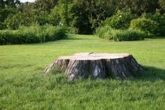 An old tree stump in your yard may be an eyesore, but you can transform it into an eye-catching display. A tree stump overflowing with bright flowers and lush, green foliage gives the illusion that . Kill Tree Stump, Kill Tree Roots, How To Make Trees, How To Kill Grass, Stump Removal, Old Trees, Epsom Salt, Lawn And Garden, Gardens