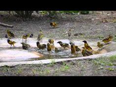Making a Splash - YouTube