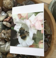 Busy Bee Close Up! Blank Photographic Greetings Card for all Occasions. £2.00 Pink And White Flowers, Busy Bee, Beautiful Gifts, Blank Cards, True Colors, White Envelopes, Photo Greeting Cards, Gifts For Friends, Gift Guide