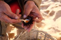 Eating a raw seafood at Moroccan beach