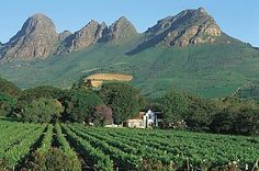 another scenic wine farm in the Western Cape.