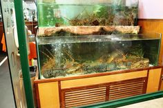 Lisabona - negozio di pesce fresco