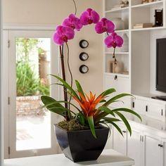 orchidee-blume-modern-arrangement-ikebana