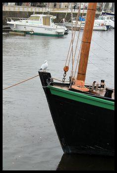 A seagull arose    Vannes - Bretagne