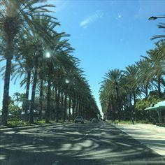 Anaheim near Disneyland Street Trees, Disneyland, Beach, Water, Outdoor, Gripe Water, Outdoors, The Beach, Beaches