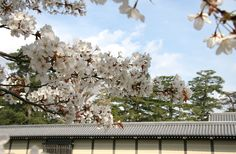 京都御苑 御所西南部辺り 2009.03.20/アンジュー フォトギャラリー
