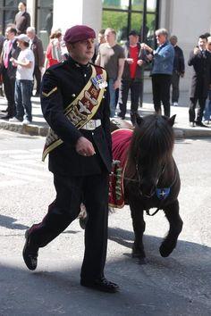 Pegasus, the Parachute Regiment's shetland pony mascot.