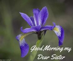 Looking for Good Morning Wishes for Sister? Start your day by sending these beautiful Images, Pictures, Quotes, Messages and Greetings to your Sis with Love. Good Morning Sister Images, Good Morning Nature Images, Good Morning For Her, Good Morning Flowers, Good Morning Picture, Morning Pictures, Prayers For Sister, Wishes For Sister, Love My Sister