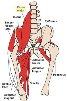 5 Body Parts You Didn't Know You Had: The Psoas
