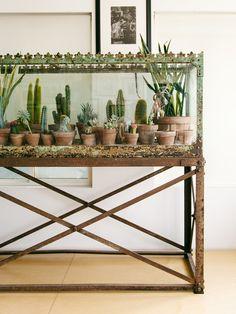 THE NEW BOHEMIANS — JUSTINA BLAKENEY Cactus aquarium/ terrarium/ splendarium.