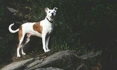 Doggy on a rock