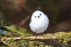 Cute Birds, Pretty Birds, Beautiful Birds, Animals Beautiful, Pretty Animals, Cute Animals, Animals And Pets, Baby Animals, Flying Flowers