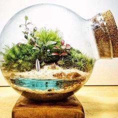 42 Awesome Bonsai Terrarium Jars Ideas - All For Herbs And Plants Mini Terrarium, Terrarium Scene, Terrarium Plants, Glass Terrarium, Succulent Terrarium, Terrarium Ideas, Mini Bonsai, Cactus Y Suculentas, Miniature Fairy Gardens